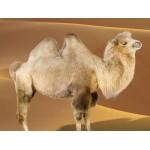 Подушки Овечья и Верблюжья Шерсть